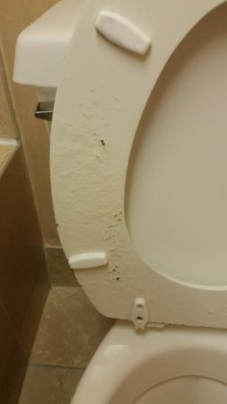 Quality Inn: Wornout Toilet Seat