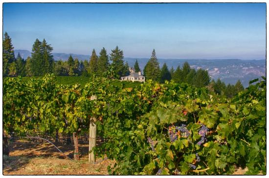 Schweiger Vineyards: View across the property and the Sweiger family home