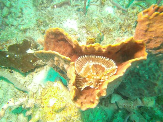 Iyanola Dive Ventures: Feather duster attached to sponge diving below the Piton Mountains