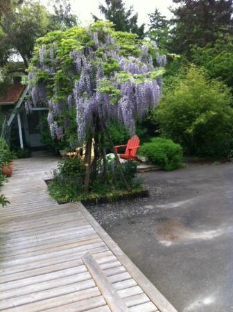 Wisteria Guest House B&B: View near entrance
