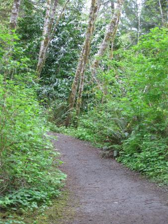 Quinault, WA: Footpath to Big Spruce