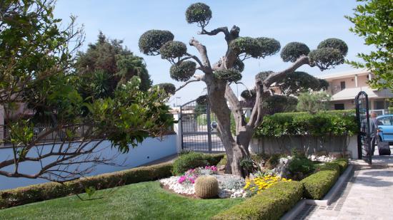 La Rosa Blu: Garden