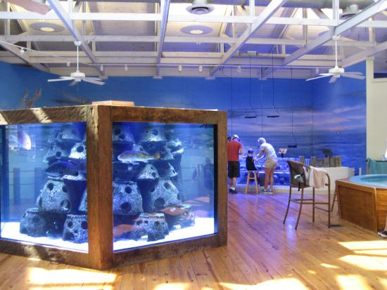 Aquariums In Daytona Beach Florida Best Accent Chairs And Aquarium