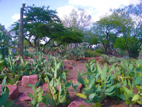 Ordinaire Ethel M Chocolates Factory And Cactus Garden: Cactus Garden At Ethel M  Chocolate Factory
