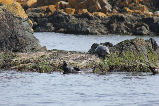 Sidney Whale Watching: Harbour Seals
