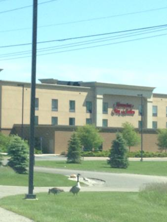 Check in with Savannah at the GR Airport Hampton Inn - Picture of ...