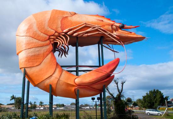 "Ballina, Australia: The ""Giant"" Prawn"