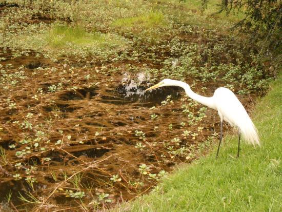 Fauna - Bild von Jardin Botanico de Bogota Jose Celestino Mutis ...