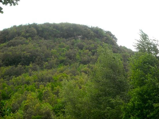 La Locanda di Valcasana : immagine del bosco vicino