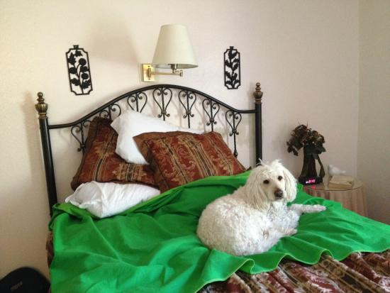 Lava Hot Springs Inn : Comfy bed -  (The tacky green blanket is ours.)