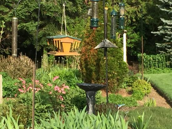 Belwood, Canada: Birds Place