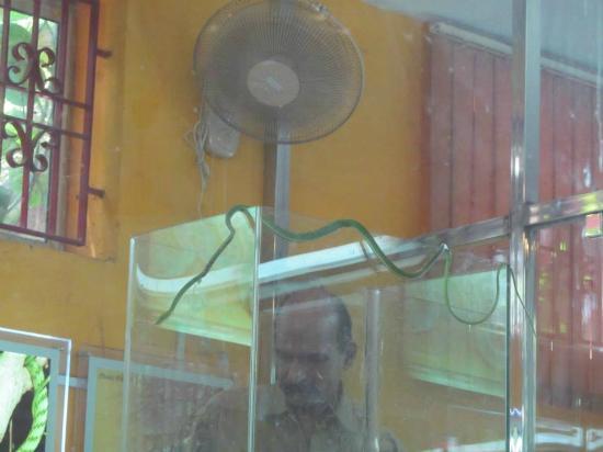Guindy Snake Park: A green snake