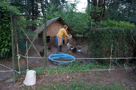 BAUDELYS : Feeding the geese