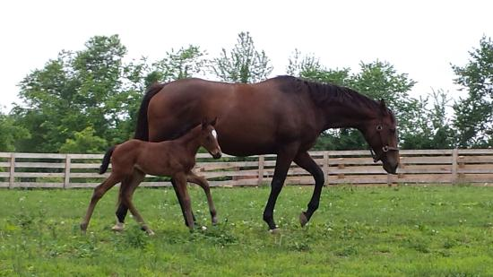 Eighth Pole Inn: Mare and 6 day old baby - what's not to love??