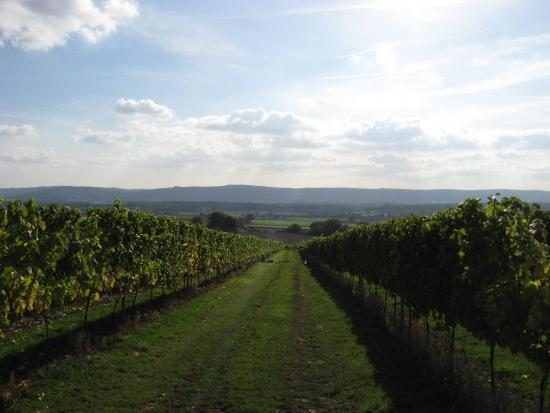 Kent and Sussex Wine Tours