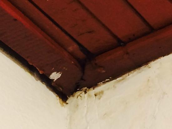 Relax Guest House: Потолок с грибком!!!
