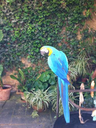Kiku .. in the garden at the Casa Rocca Piccola - Picture of Casa ...