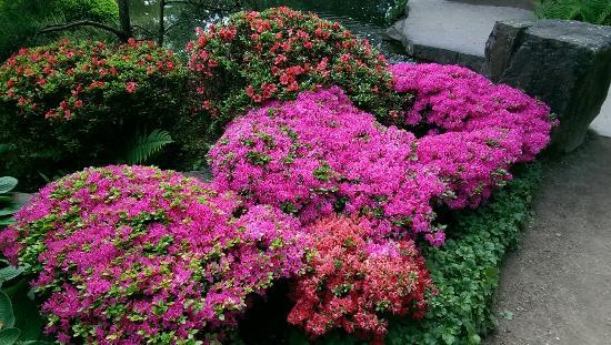 Japanischer Garten (Japanese Garden): Japanischer Garten
