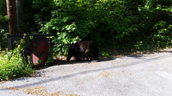 The Summit of Gatlinburg: We saw this bear on the ride up to the condo