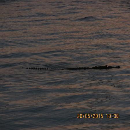 Sunset Marina Resort & Yacht Club: cocodrilo en la laguna