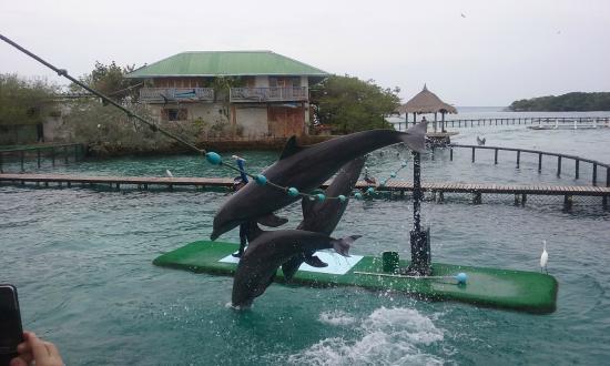 Oceanario Colombia