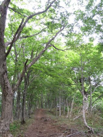 Mt. Hyonosen