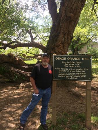 Old Fort Harrod State Park: Weirdest tree ever