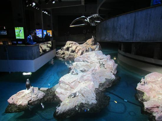 New England Aquarium Picture Of New England Aquarium