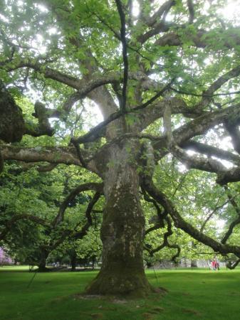 arbre magnifique photo de parc animalier et botanique de branf r le guerno tripadvisor. Black Bedroom Furniture Sets. Home Design Ideas