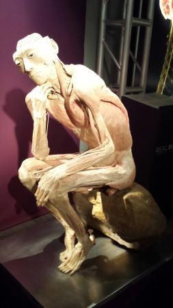 Body Worlds - Il Ciclo della Vita