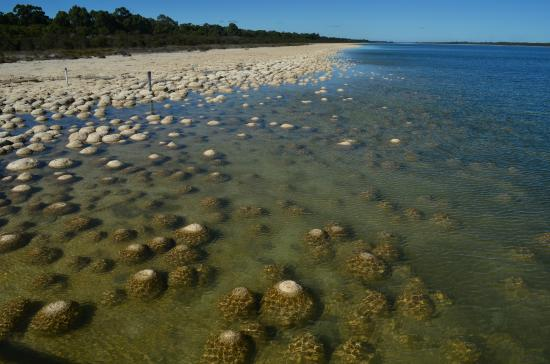 Thrombolites of Lake Clifton