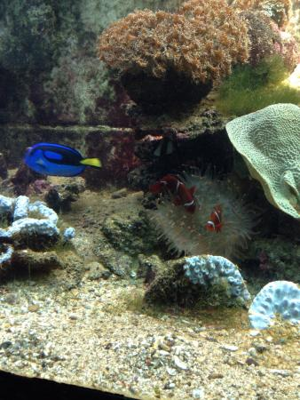 Reefworld Aquarium and Shark Swim: Something for the Nemo lovers.