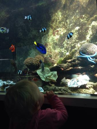Reefworld Aquarium and Shark Swim: Plenty to find.