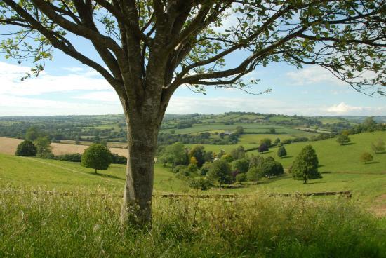 Batcombe Vale Campsite: View over Batcombe Vale