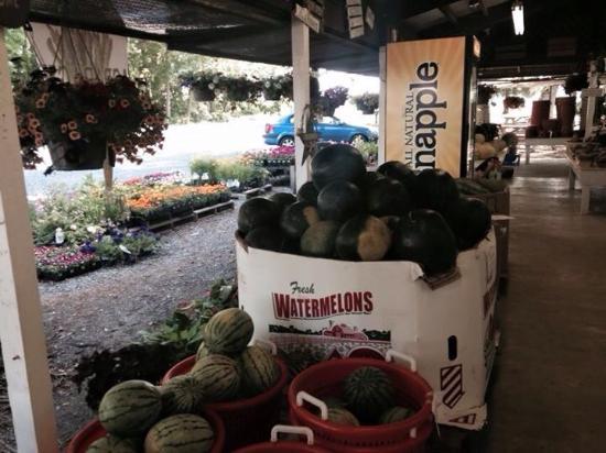 Greenwood, Ντέλαγουερ: Melons