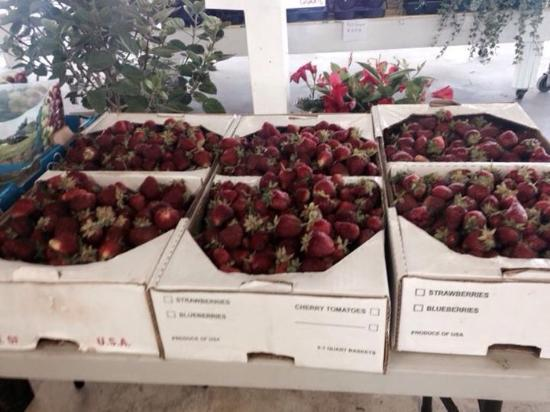 Greenwood, Делавер: Fresh picked strawberries