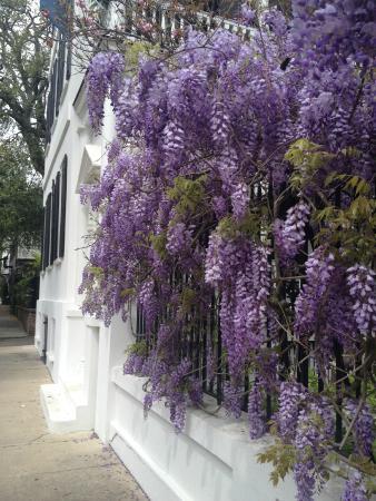 Battery Carriage House Inn : Charleston Beauty