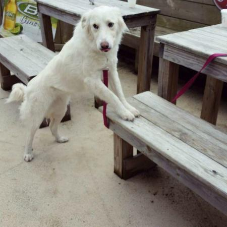 Island Hots : Pet Friendly patio
