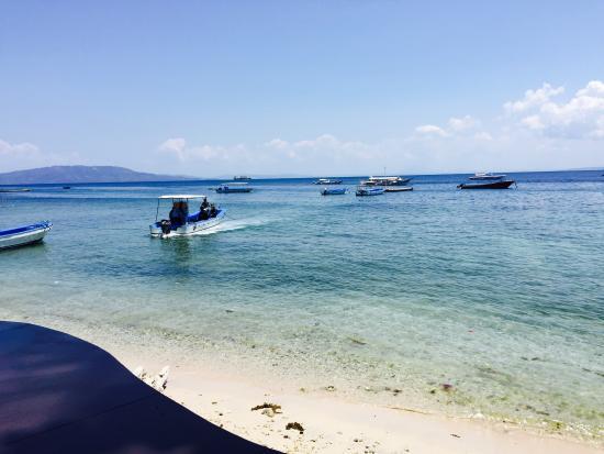 Bilde fra Blue Ribbon Dive Resort