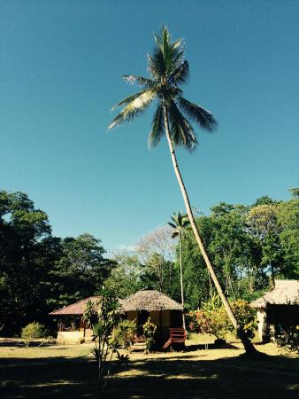 Lorenso Cottages Beach Garden: Beautiful palm trees