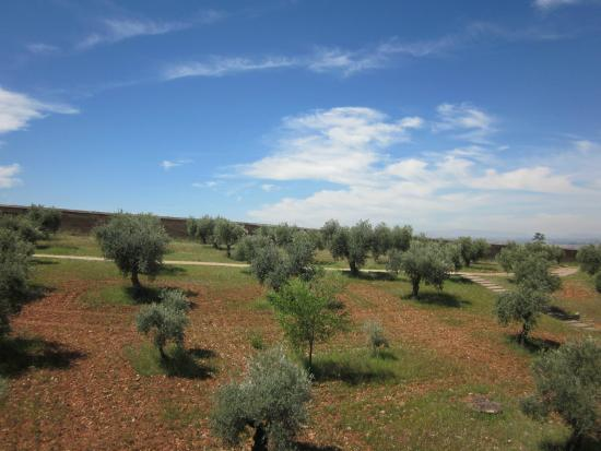 Guadalupe Hotel: View of olive trees
