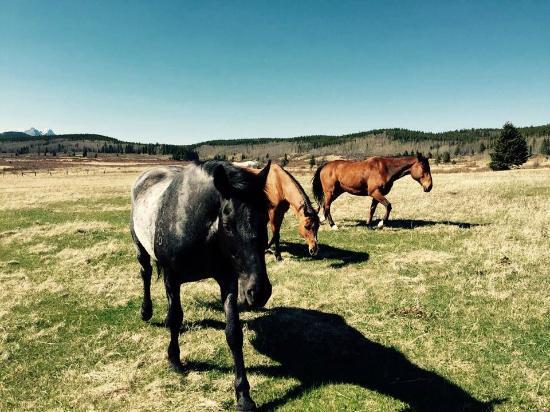 Brewster Adventures: Horses at Ranch