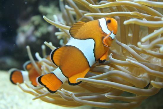 Busumer Meereswelten