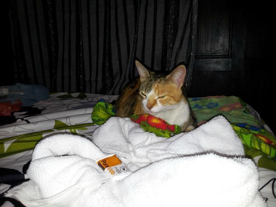 Hemingway Inn: Friendly local cat