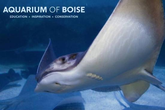 ‪Aquarium of Boise‬
