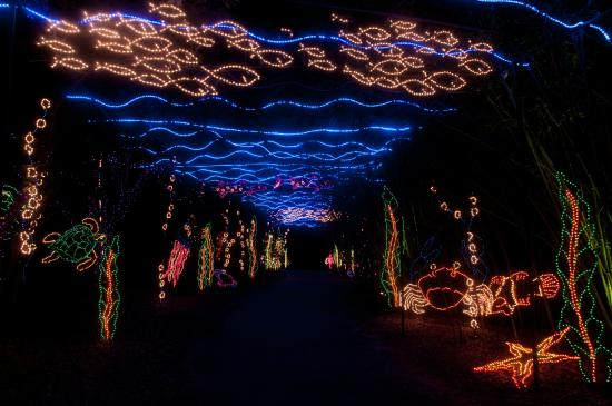 Magic Christmas.The Underwater Garden Of Magic Christmas In Lights See It This