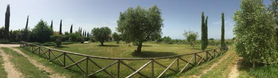 Pescia Romana, อิตาลี: photo1.jpg