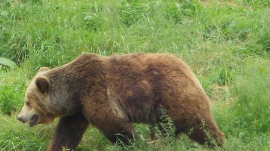L 39 ours photo de le refuge de l 39 arche ch teau gontier tripadvisor - Le refuge des 3 ours ...