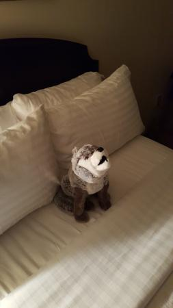 Comfort Inn Newport News/Williamsburg East: Thoughtful staff set up my son's new Busch Gardens Wolf on his bed to welcome him back to the ro