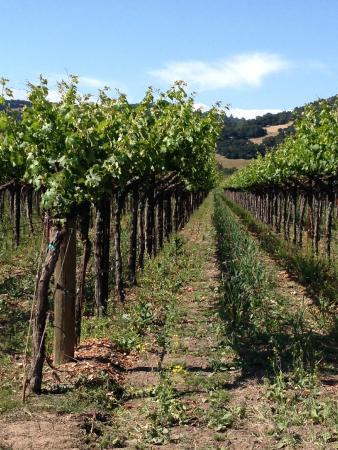 The Cottage Inn & Spa: vineyard